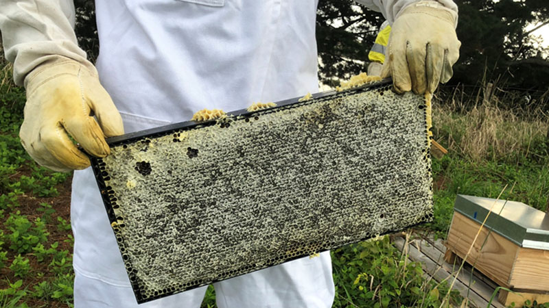 Fisher & Paykel Healthcare - Beehives on site
