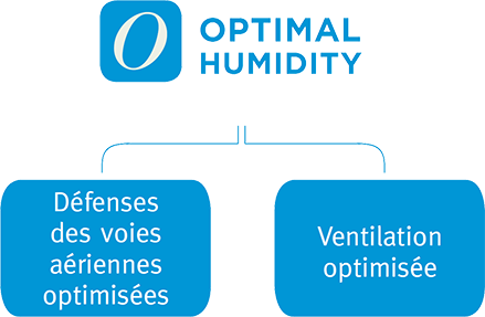 Optimal Humidity Optimizes Airway Defense and Ventilation